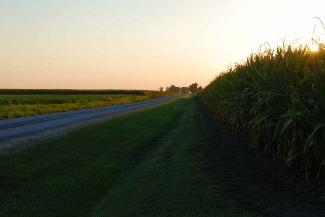 County Road and Corn